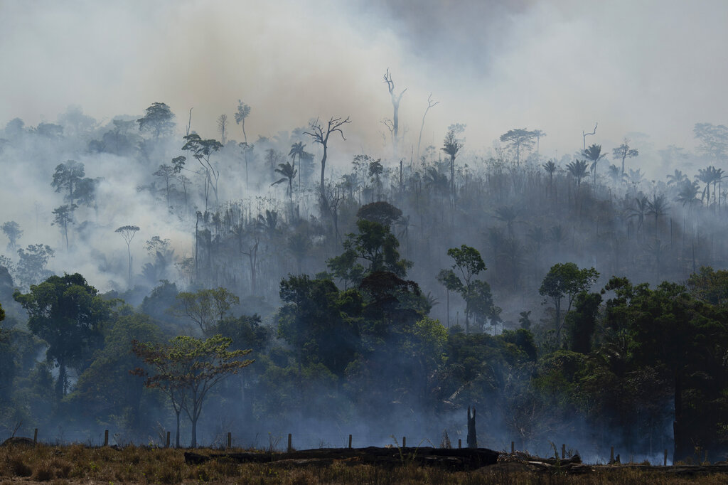 The ancient flames of forest fires