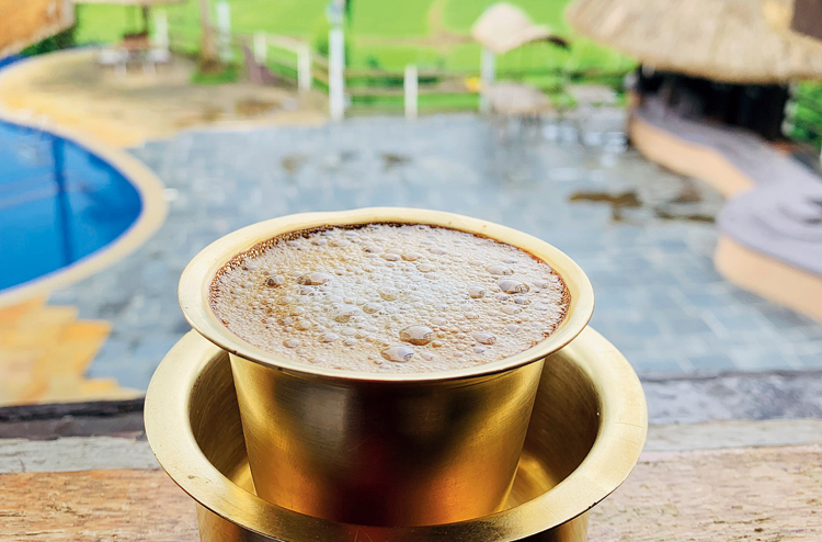 Coorg coffee is grown at a high altitude and under a well-defined two-tier mixed shade canopy