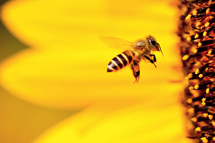 Last winter, beekeepers in the United States of America lost about 40.7 per cent of their bee colonies, the highest recorded loss in 13 years.