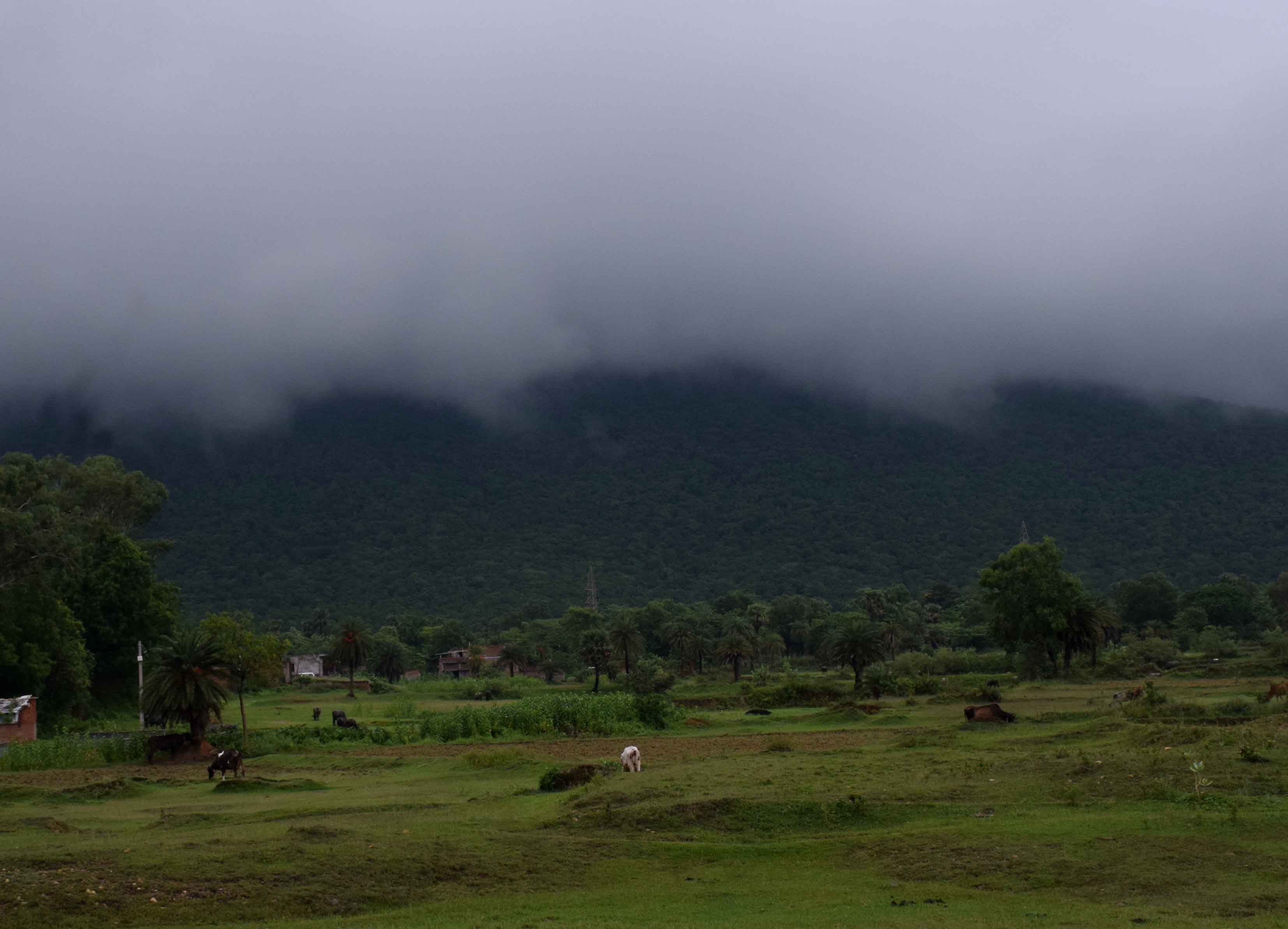 Monsoon clouds descend on Dalma hills on the outskirts of Jamshedpur on Sunday