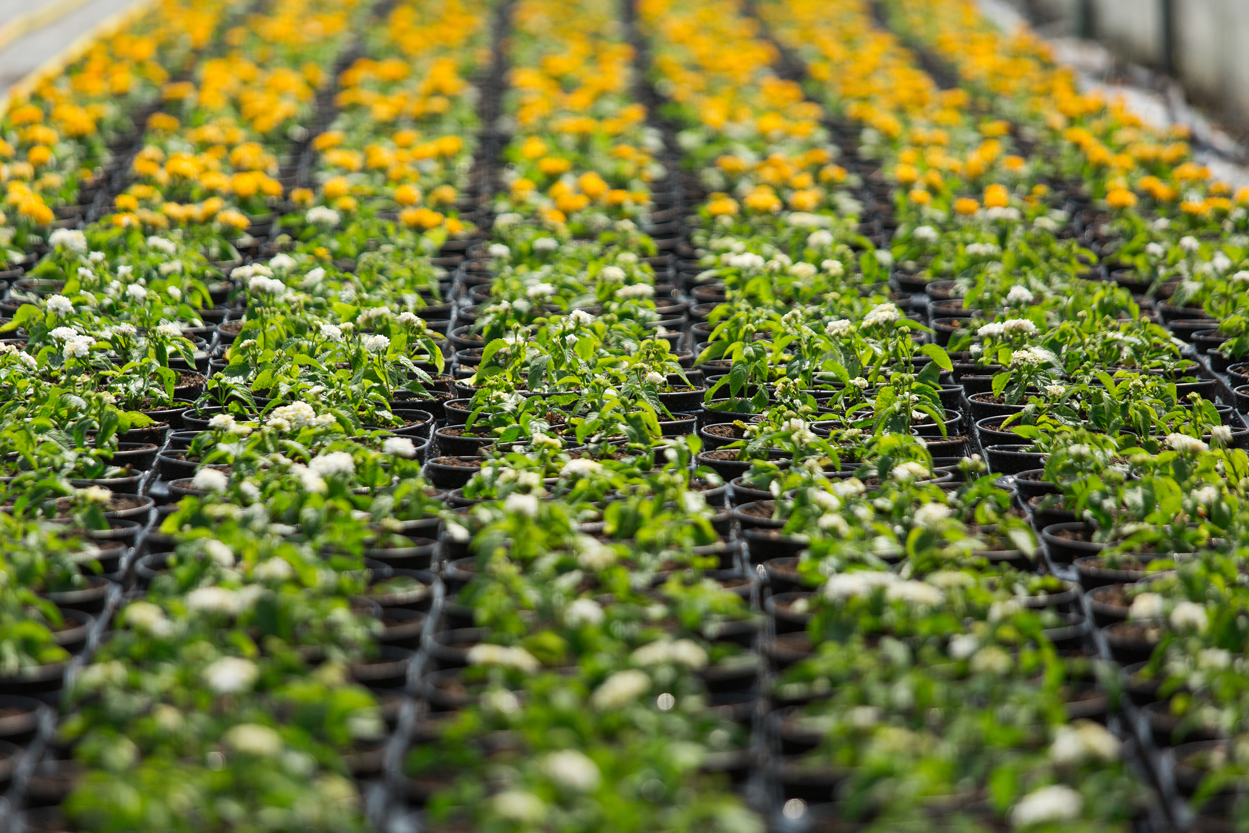 The focus sectors are tea, agro and allied products, food processing, floriculture, sericulture, bamboo, traditional handloom and handicraft products