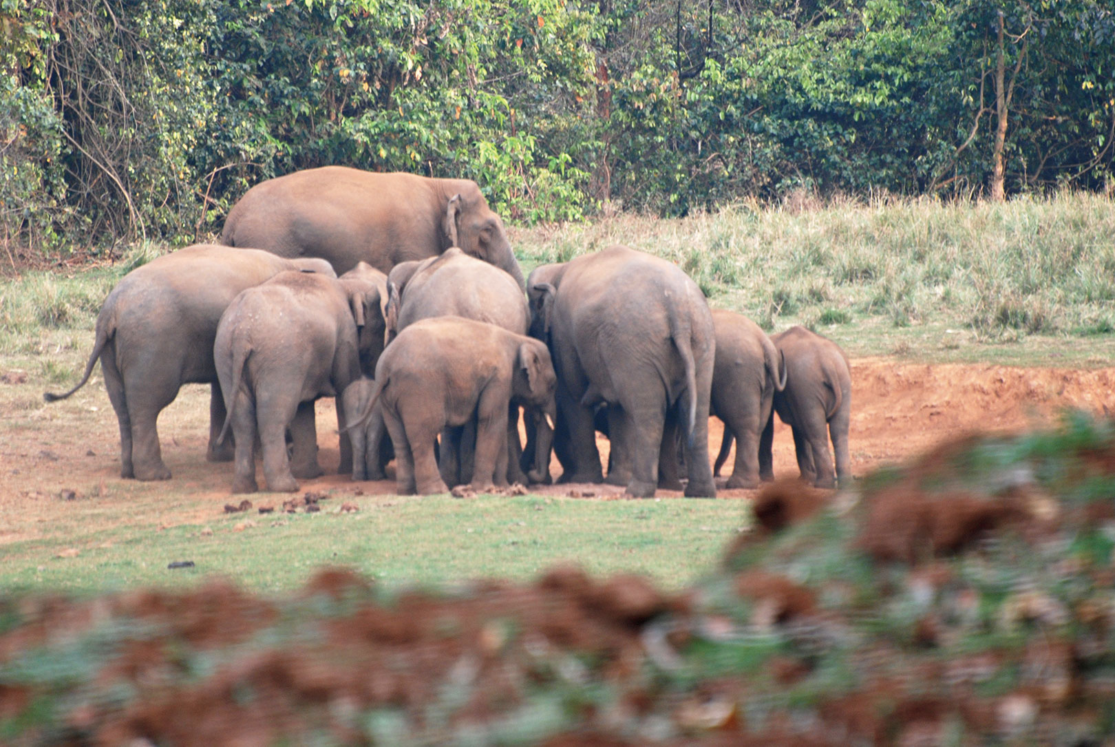 Elephants migrate long distances in search of food and shelter across states and countries.
