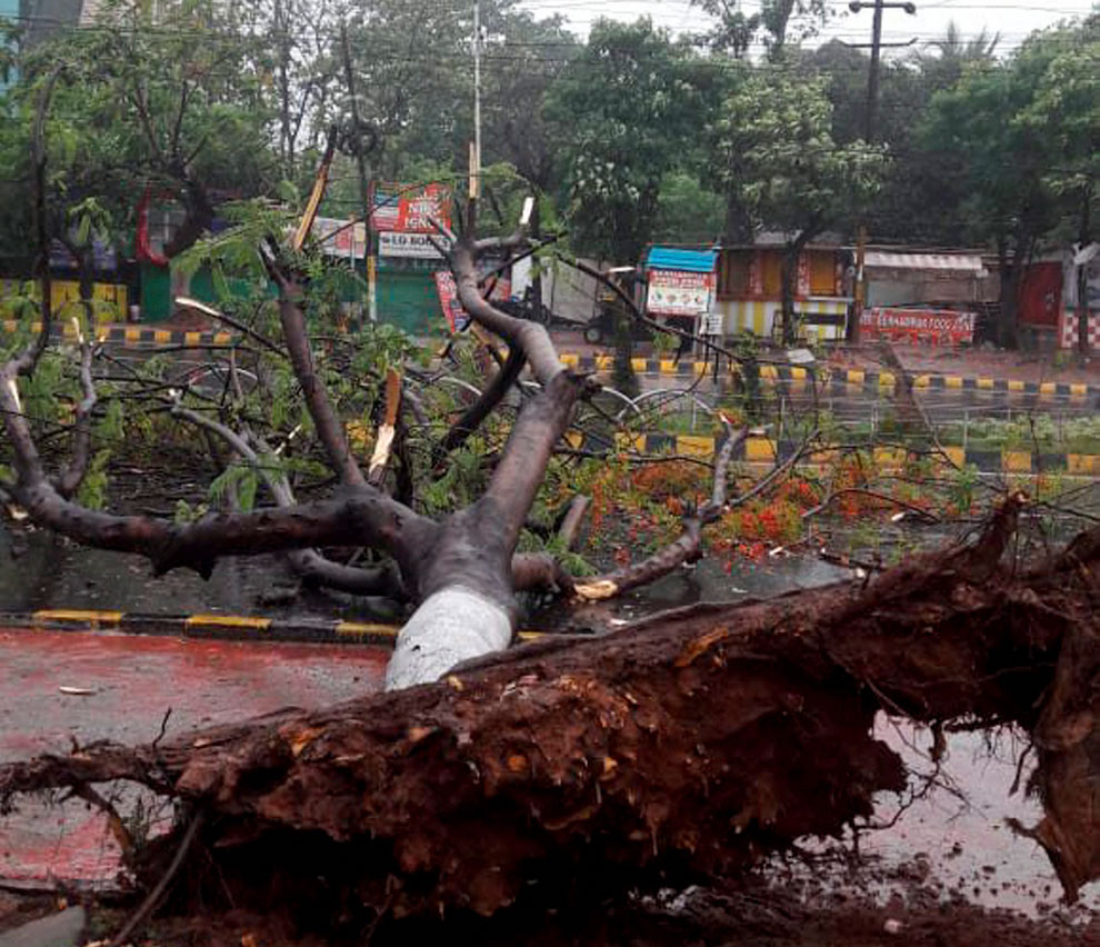 A tree is uprooted due to cyclone Fani, in Bhubaneswar on Friday, May 3, 2019.