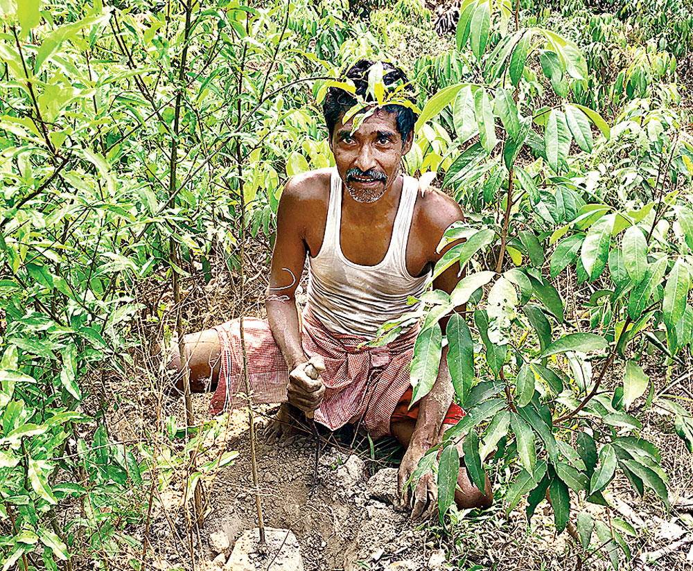 Arun Kumar in the little patch of sustenance he has crafted