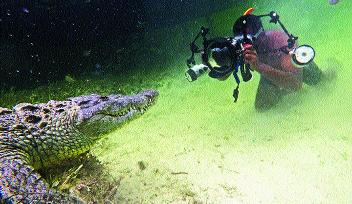 Dhritiman Mukherjee shoots a crocodile at the Banco Chinchorro atoll reef off the coast of Mexico.