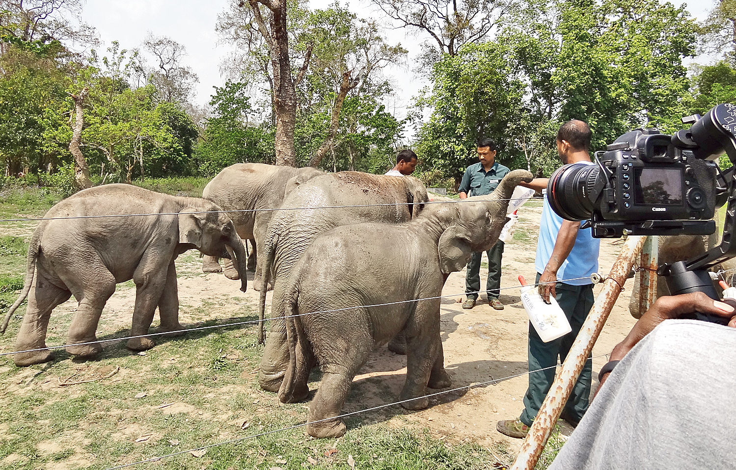 Baby elephants being fed by keepers at Kaziranga National Park