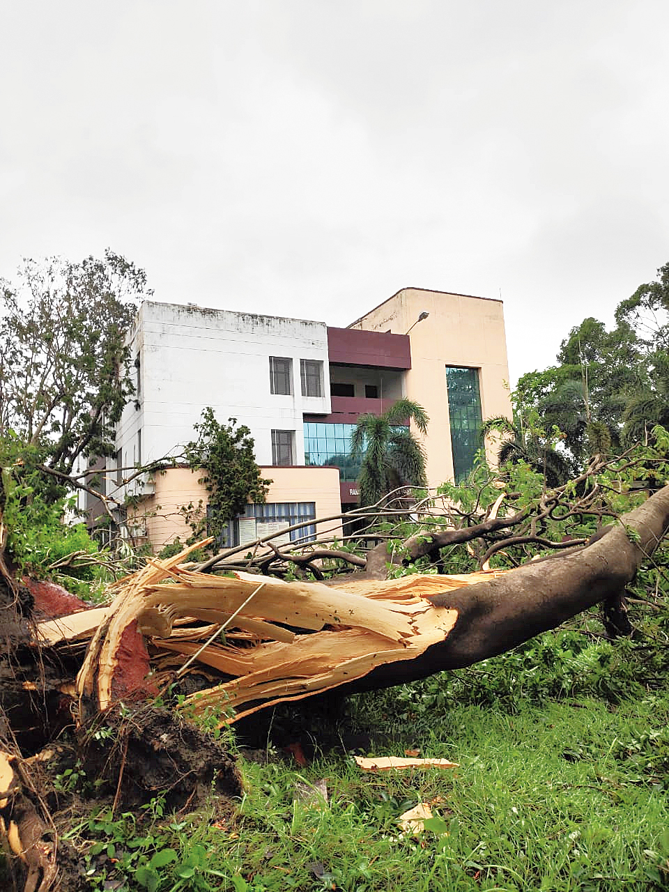 An official of the institute said some of the uprooted trees were more than 150 years old.