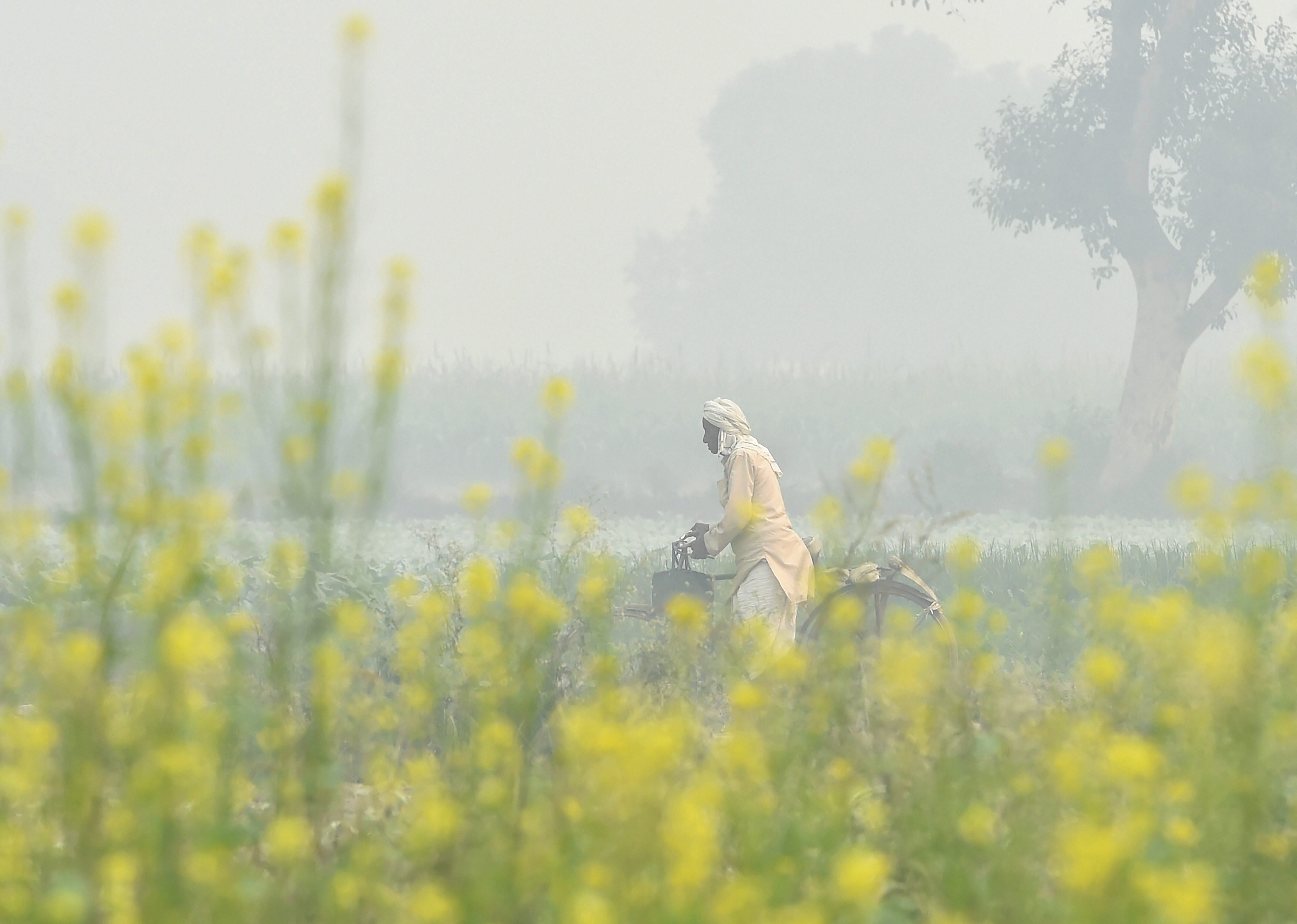 A cyclist walks across a field engulfed in a thick haze in New Delhi on Thursday, November 8.