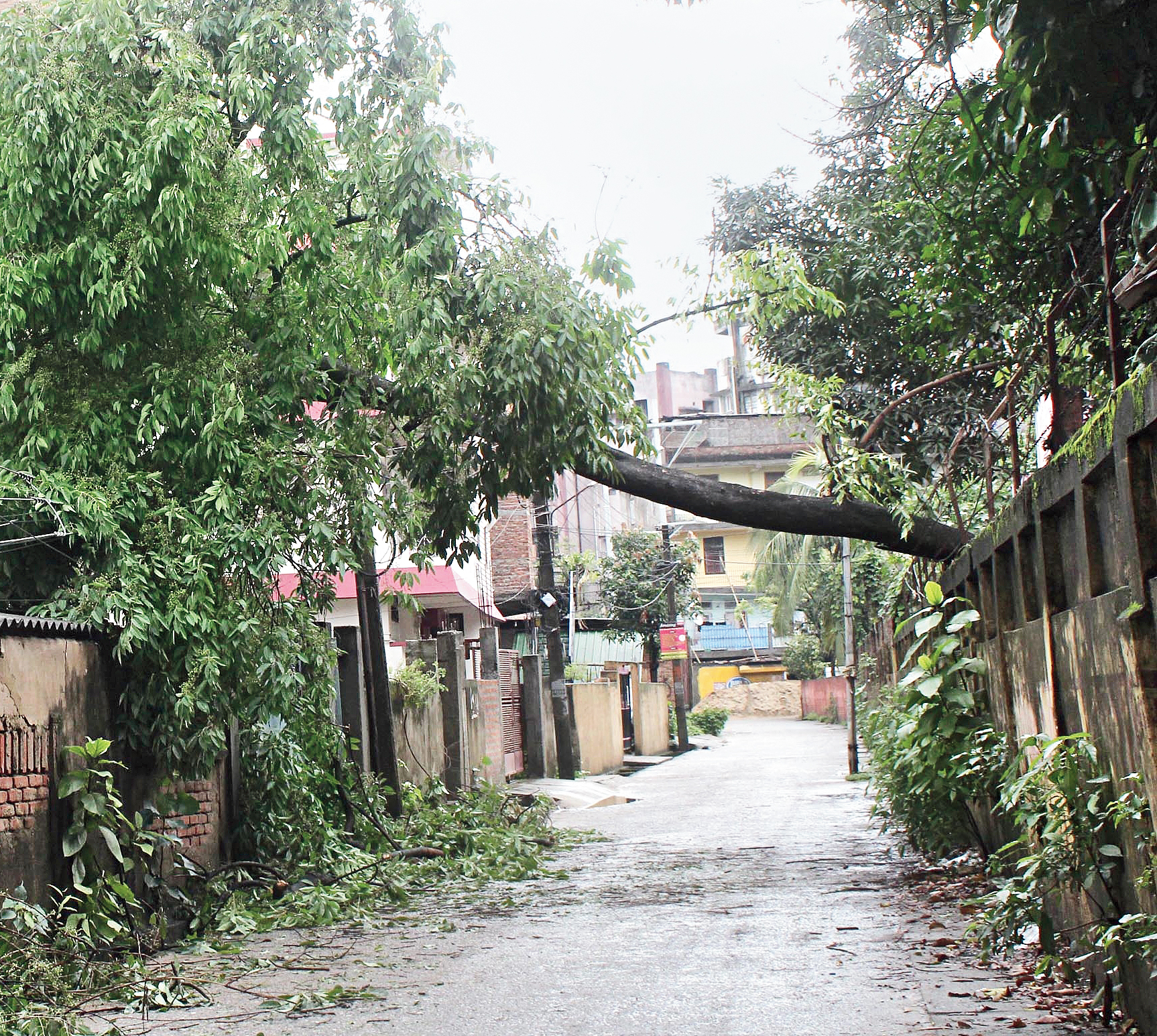 A tree that fell during the storm at Bhangagarh in Guwahati.