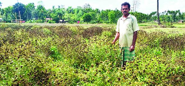 Hardhan Biswas in his garden.
