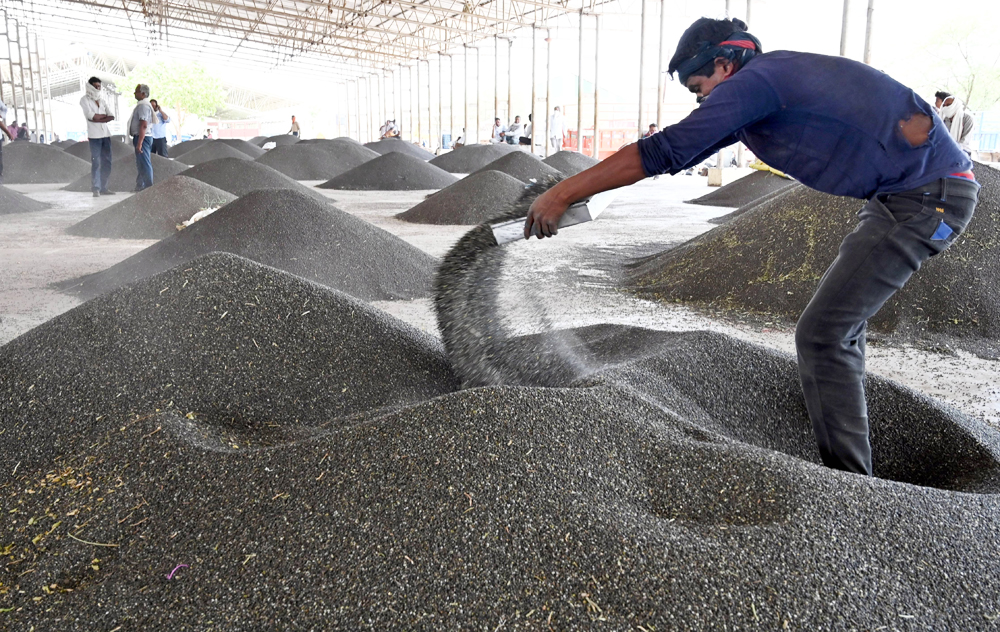 A labourer sorts pulses at a market, during ongoing Covid-19 lockdown, in Jabalpur, Saturday, May 30, 2020.
