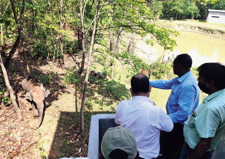 Veterinary doctors atop a watchtower observe the wounded jumbo for its treatment inside Dalma Wildlife Sanctuary on Saturday.