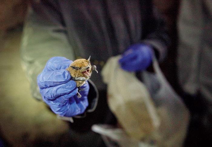 Virus in flight: Wuhan strain of coronavirus probably originated in bats