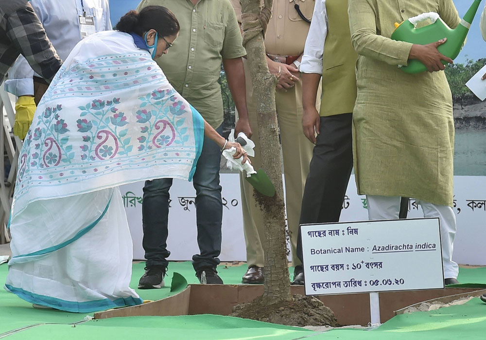 West Bengal chief minister Mamata Banerjee plants a neem sapling on the occasion of World Environment Day in Calcutta on Friday