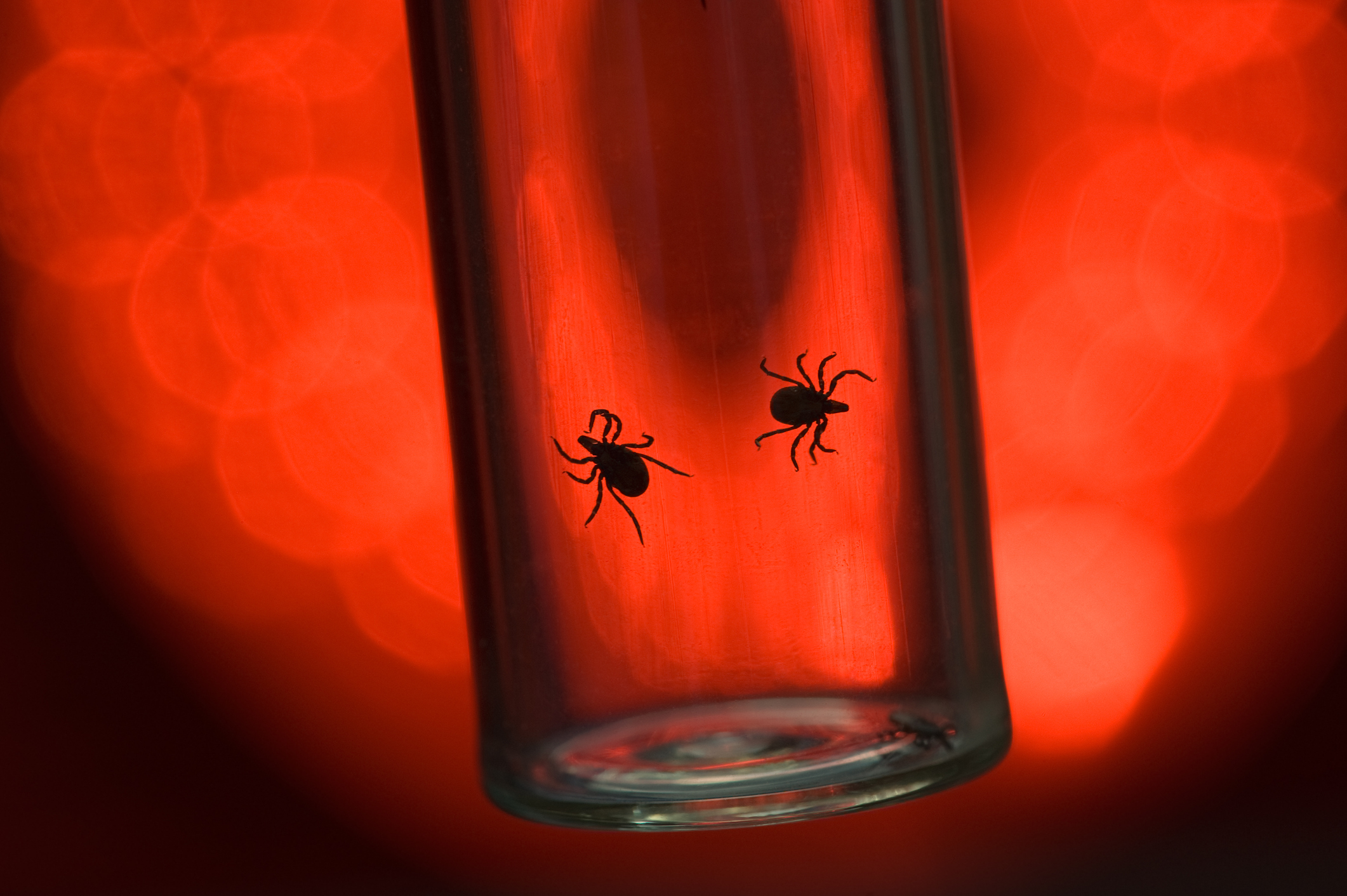In 2013, there was a Lyme disease outbreak in Kerala that took the life of a 50-year-old woman