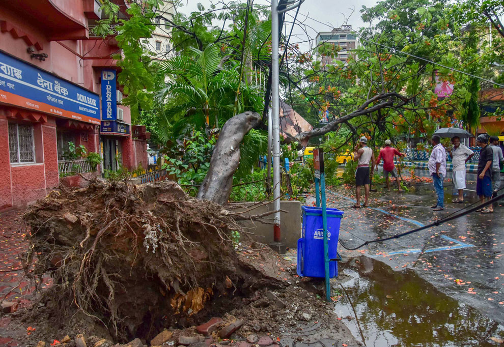 A tree uprooted by Cyclone Fani in Kolkata on Saturday, May 4, 2019.