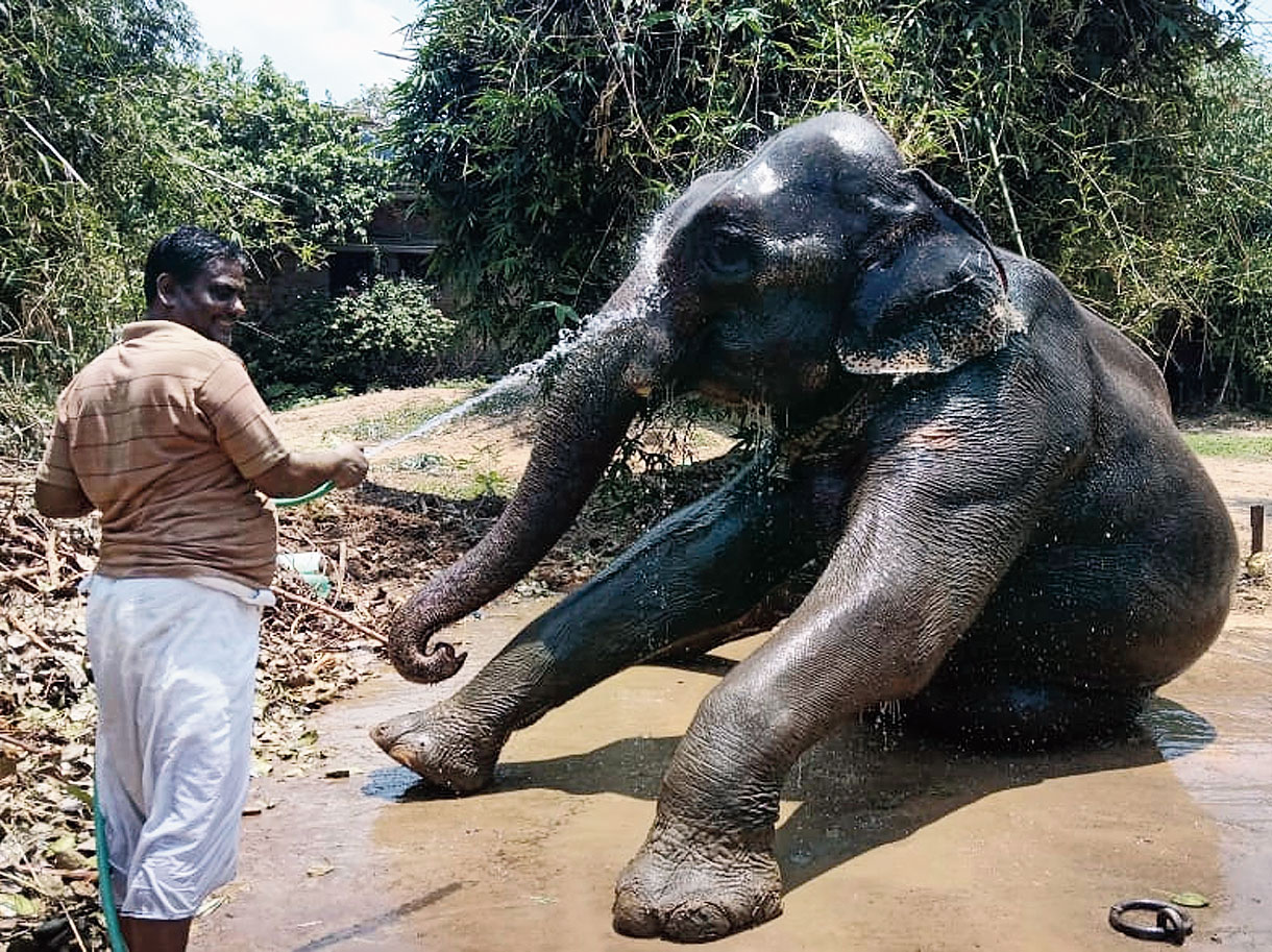 Akhtar Imam with one of his elephants.