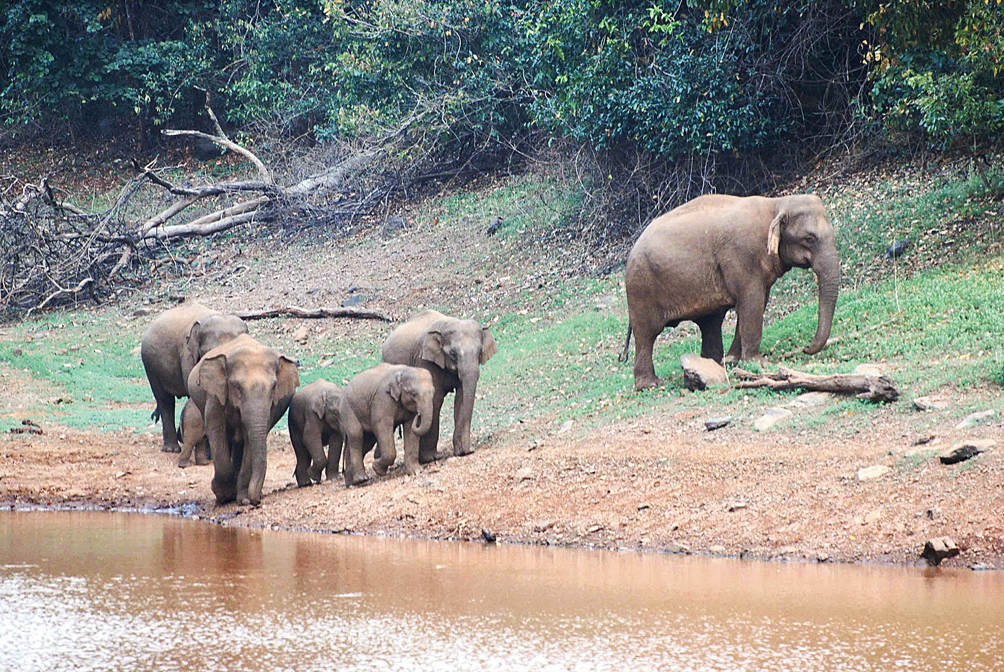 A forest guard said they were happy that the elephants were back home.