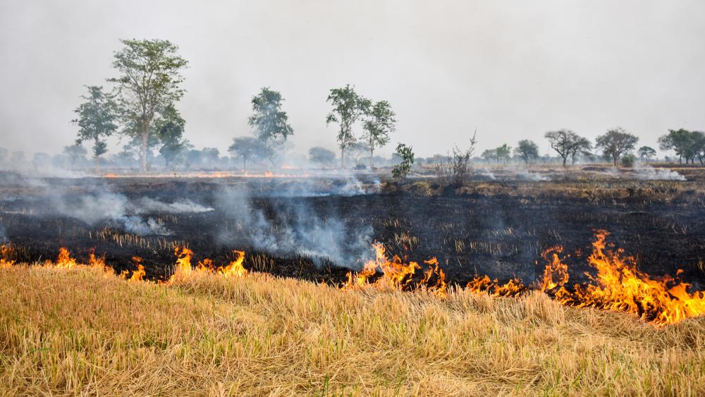 SC cracks whip on stubble burning