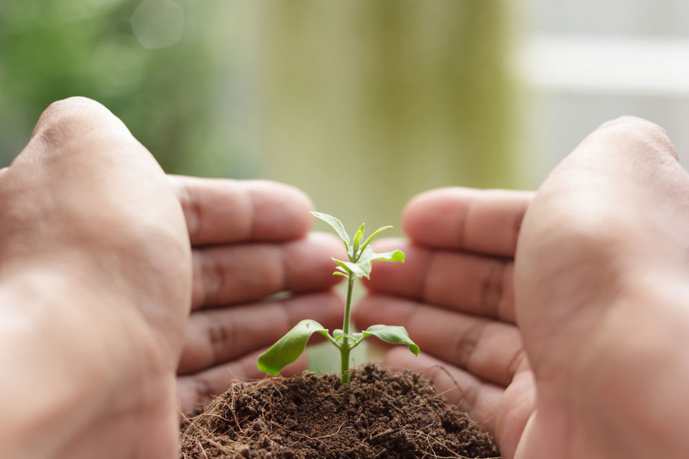 In Alappuzha, Kerala, new homeowners must plant a sapling to get their registration approved by the municipality.