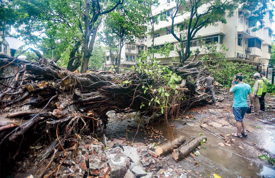 Workers try to remove an uprooted tree that fell on a road in Mumbai on Wednesday after Cyclone Nisarga made landfall along the Maharashtra coast.