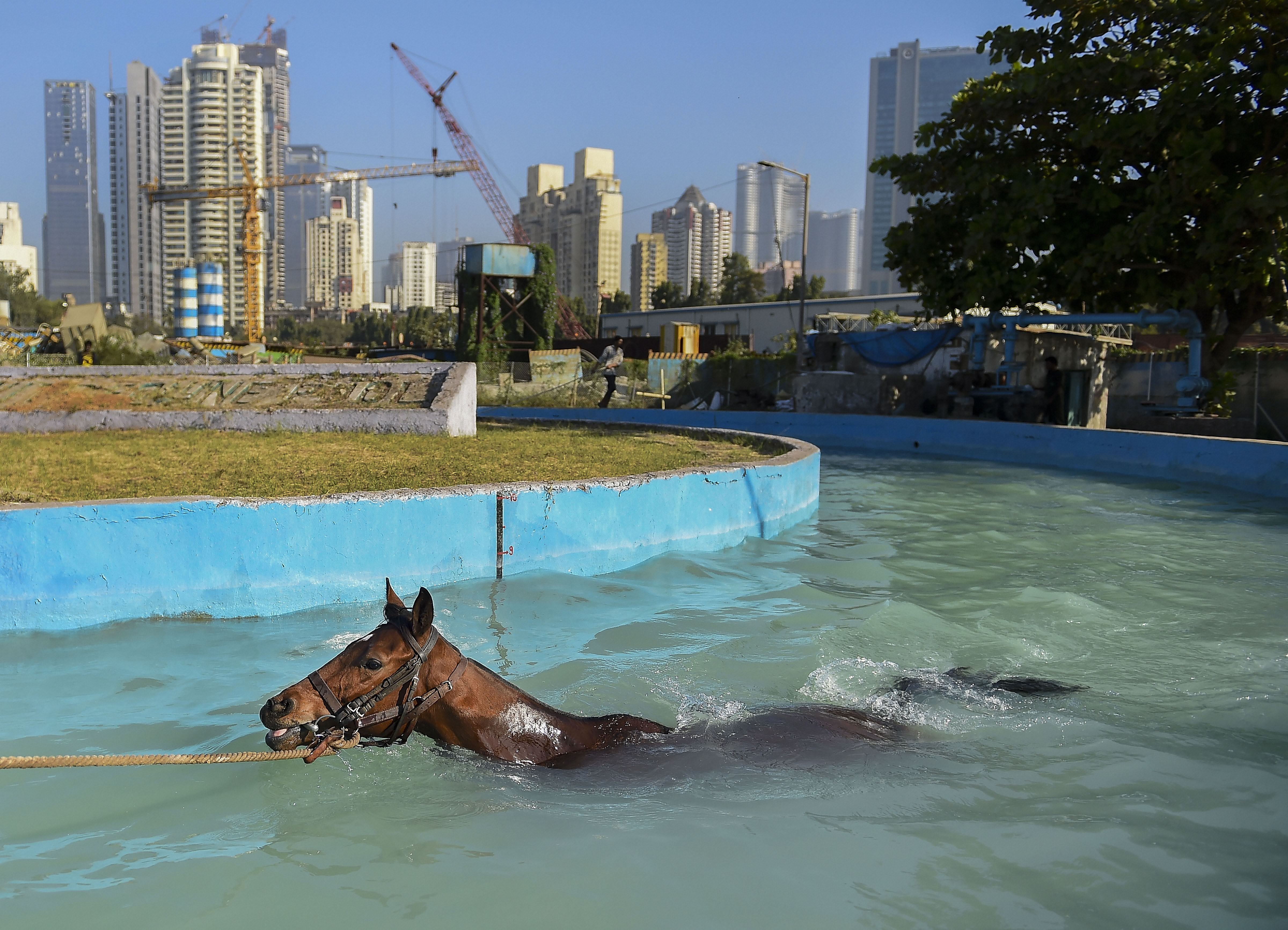 A horse is being trained at the Mahalaxmi Race Course for the Indian Derby in Mumbai