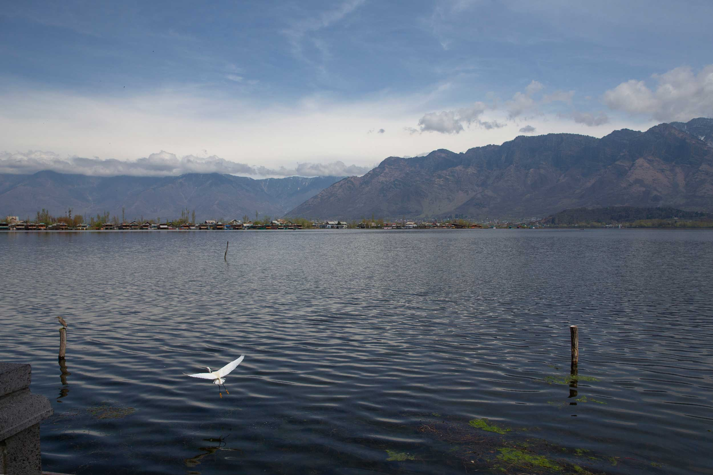 A view of the deserted Dal Lake during the lockdown in Srinagar on Friday.
