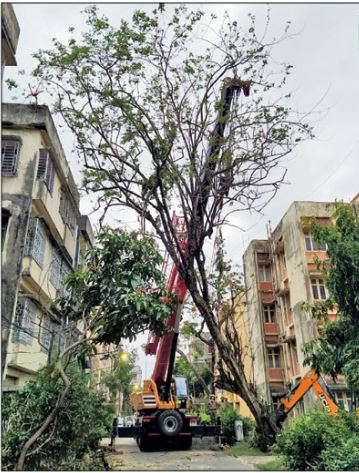As the cranes lifted the trees, a team of firemen prepared to slice through the branches
