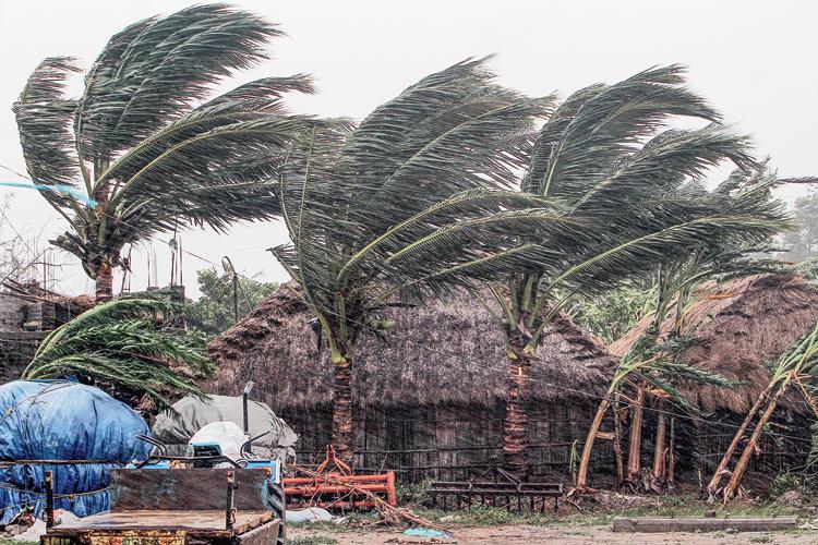 Trees sway near Dhamara Port in Bhadrak, Odisha, during the cyclone on Wednesday.