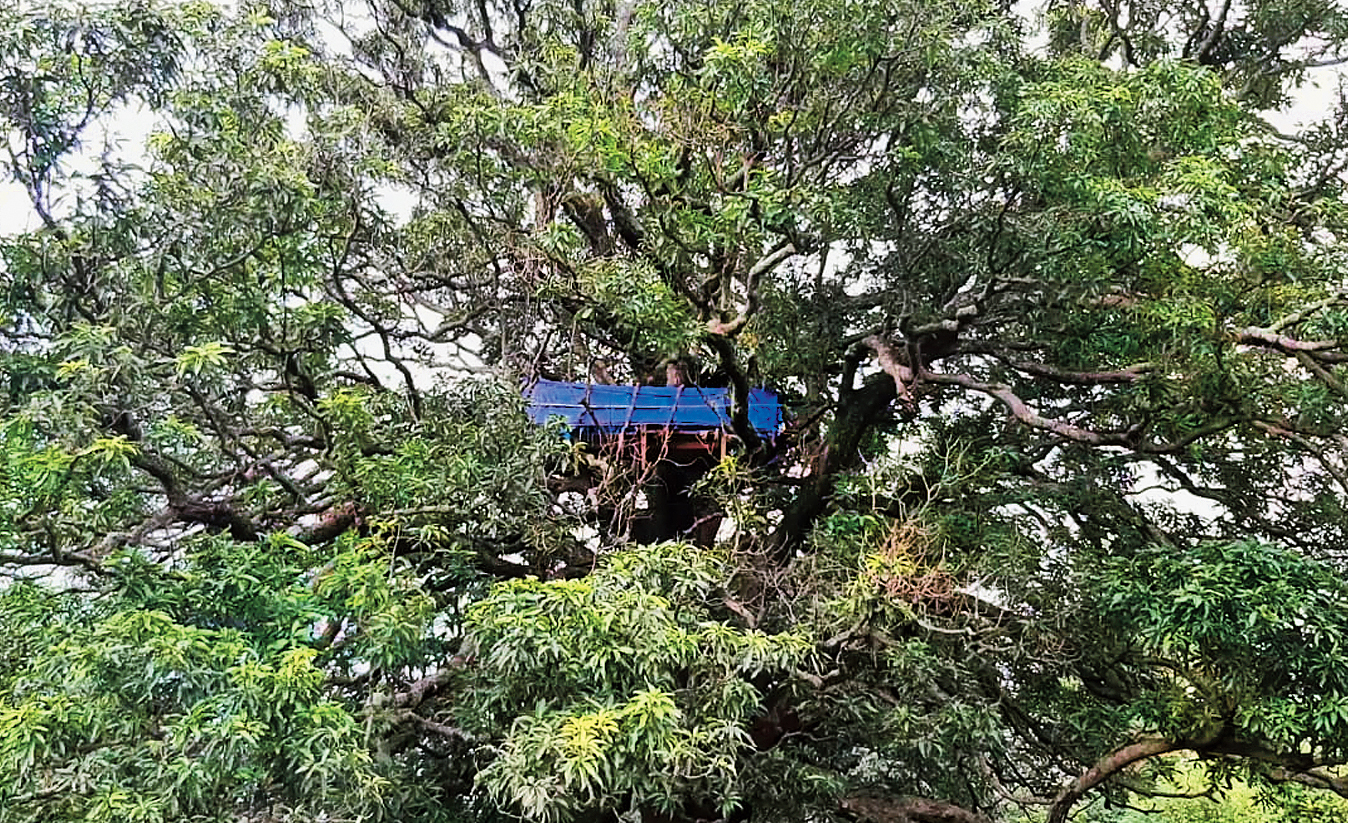 The tree house of the Nayak family