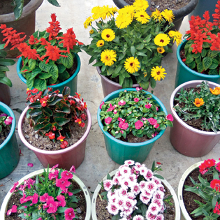 From petunia to marigold, add colour to your garden with these flowering plants