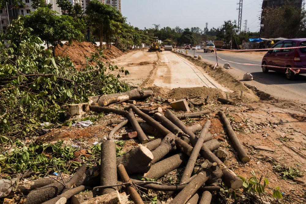 Sources said the forest department had approved the felling of 411 trees along the 25km stretch of a state highway between Krishnagar and Majhdia.