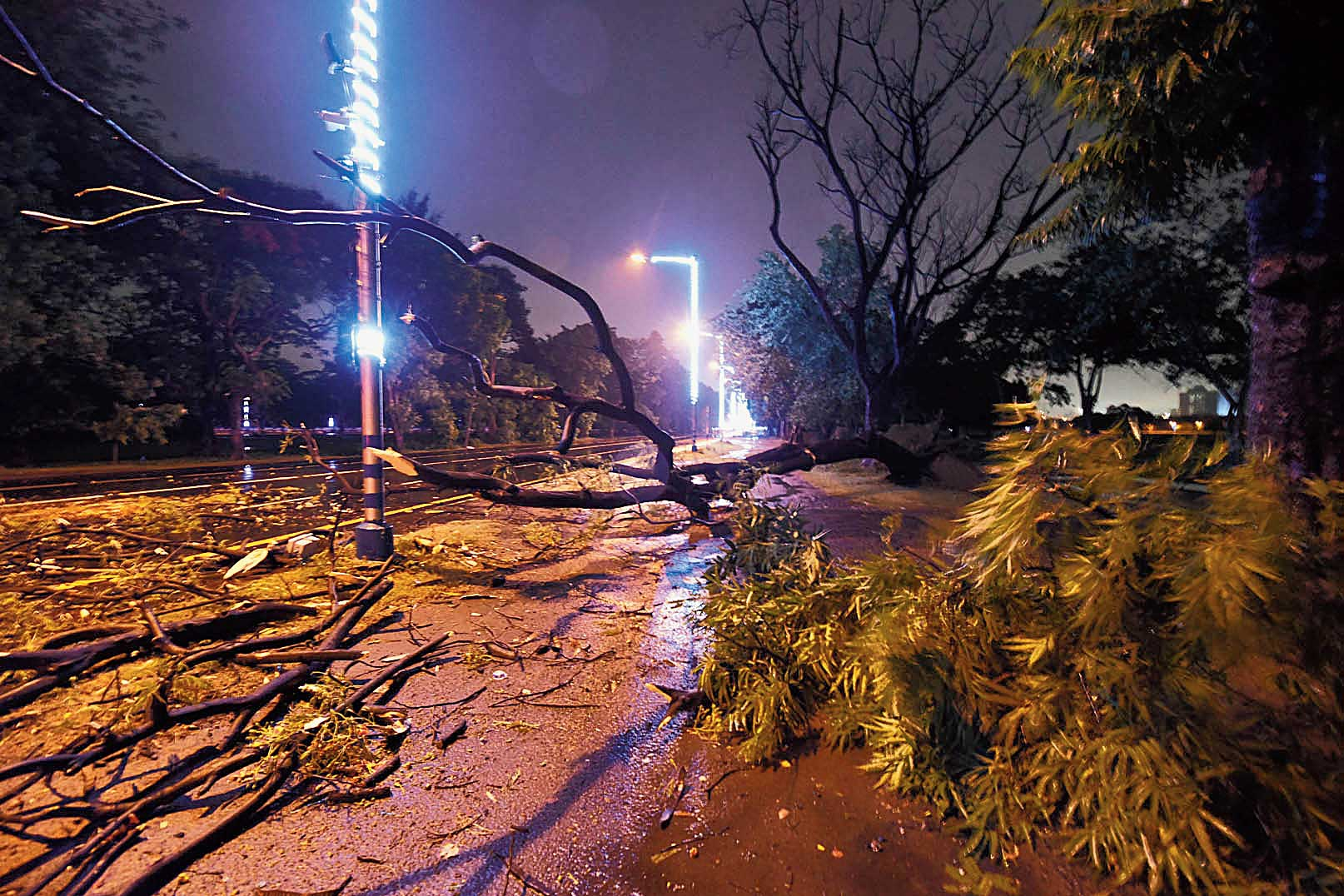 Uprooted trees on Red Road around 3.30am on Saturday