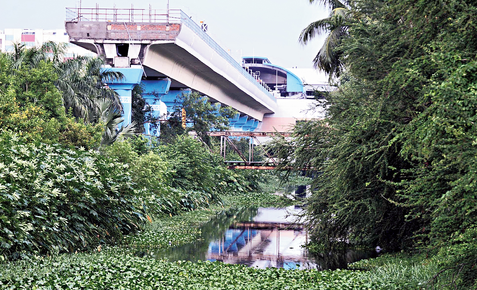 Water hyacinths and wild growth engulf much of the canal under the viaduct.