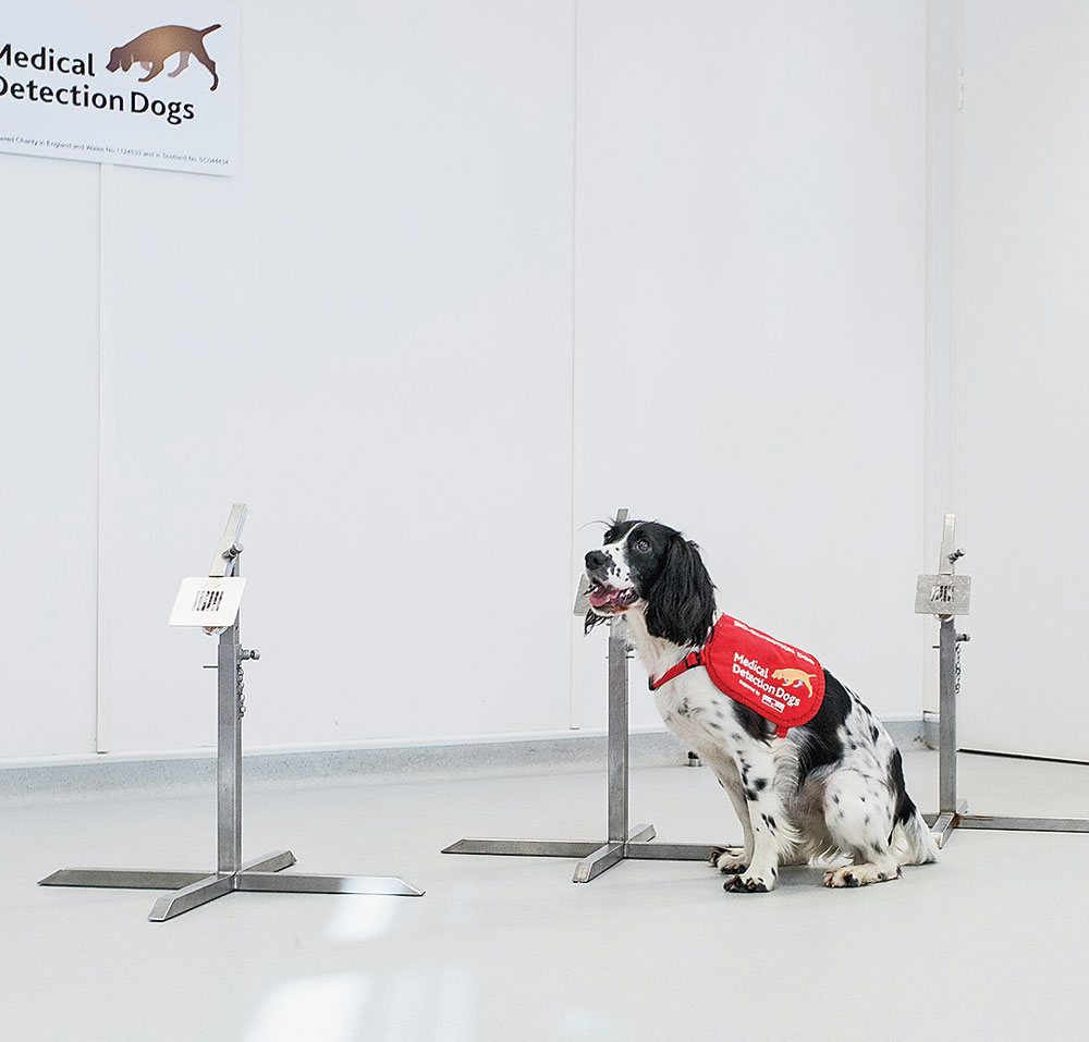 Dogs can sniff malaria in people without signs