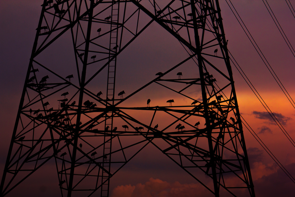 Power generation growth slipped sharply by 12.2 per cent in October compared with 10.8 per cent in the year-ago period