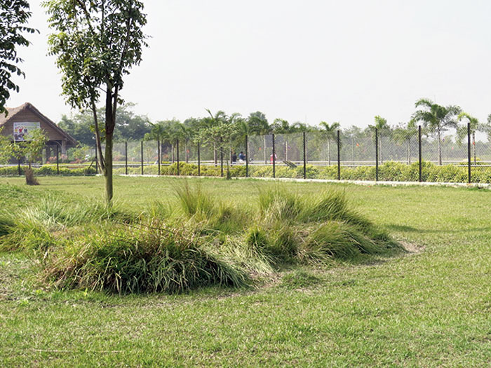 An island of dense grass created for newborn deer to take refuge in for the first month after birth
