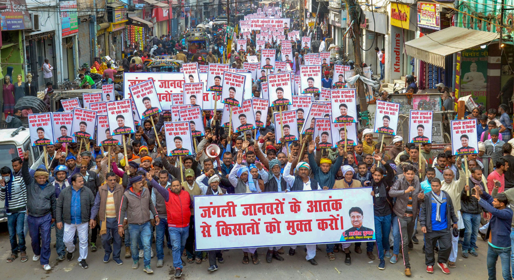 Farmers protest the destruction of crops by wild animals in Muzaffarpur on December 20