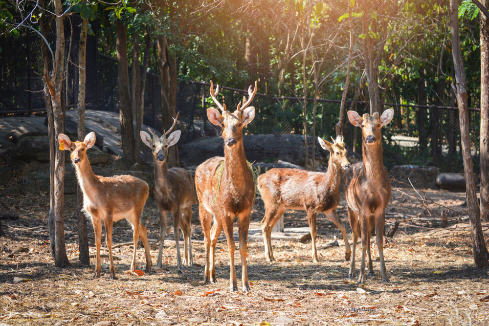 The National Green Tribunal has directed the Centre and the Uttar Pradesh government to specify the boundary of the Hastinapur wildlife sanctuary within six months