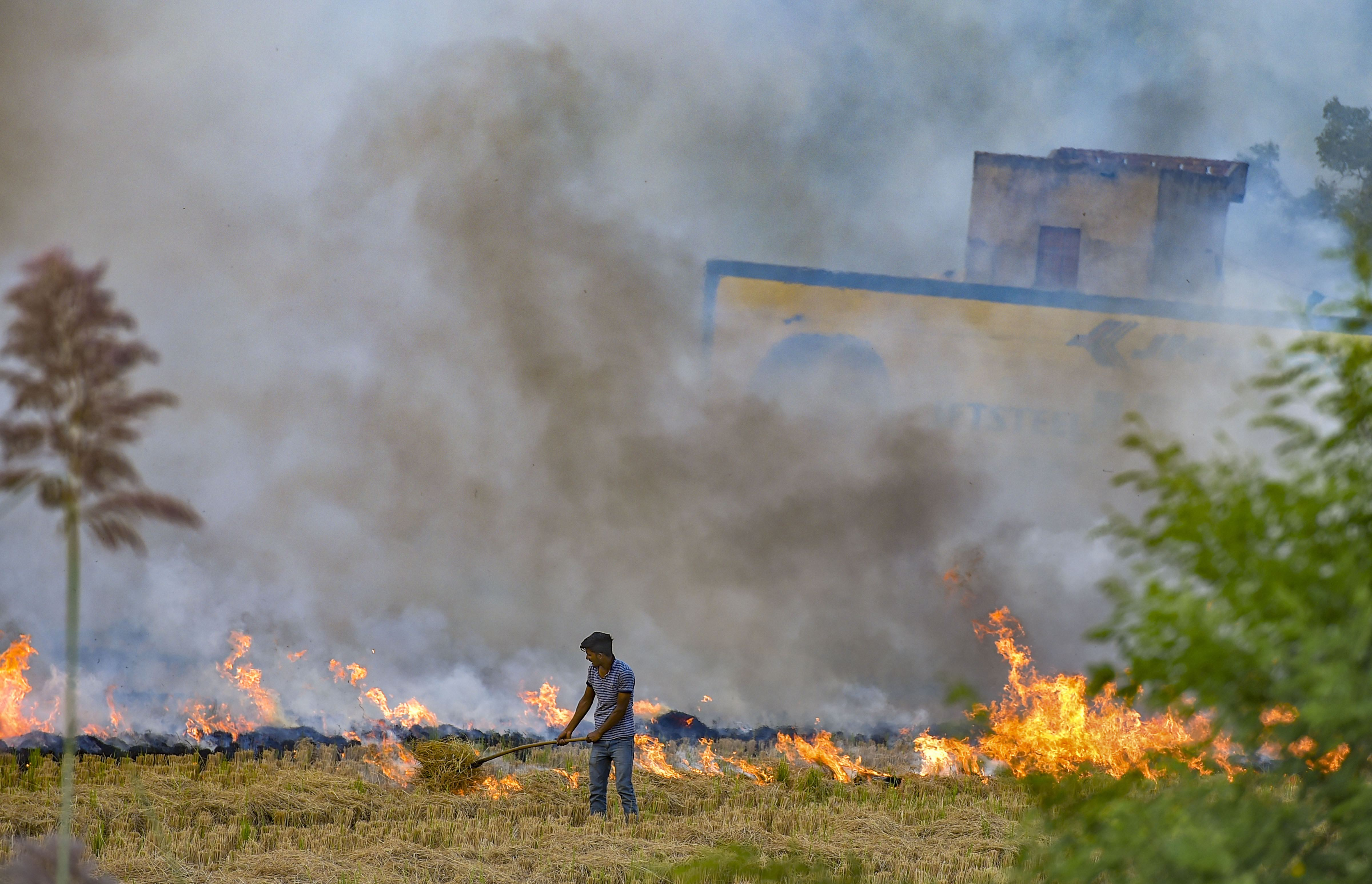 A farmer burns paddy stubbles in a field in a village in Hisar district of Haryana on Friday, October 18, 2019.