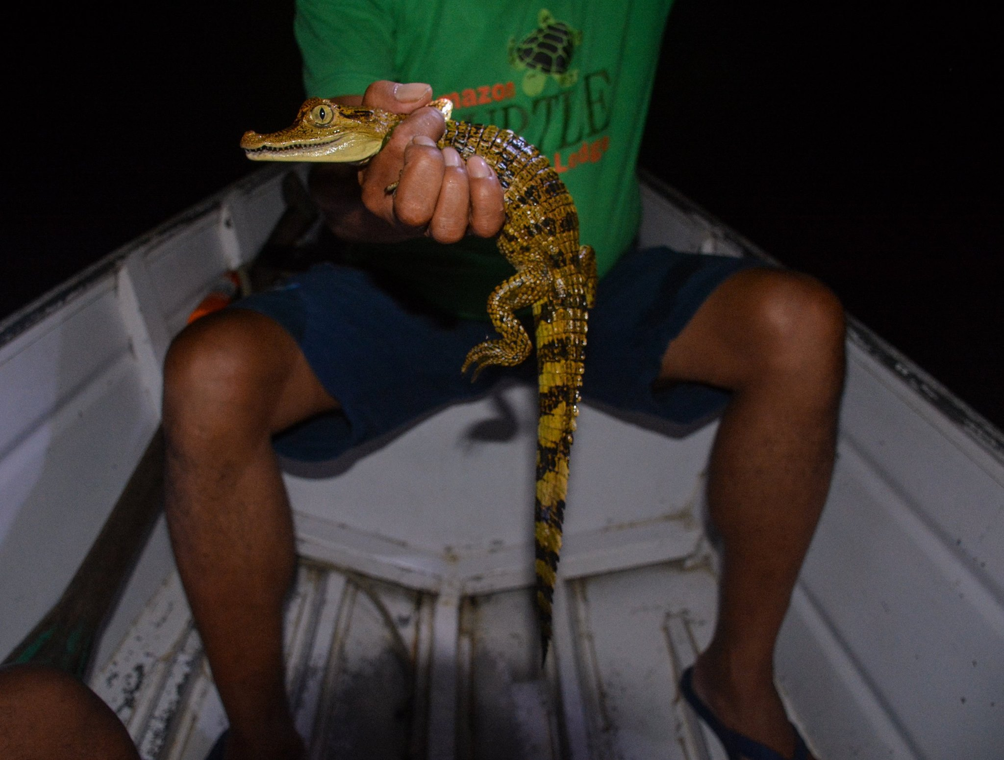 Posing with a baby caiman, a kind of alligator