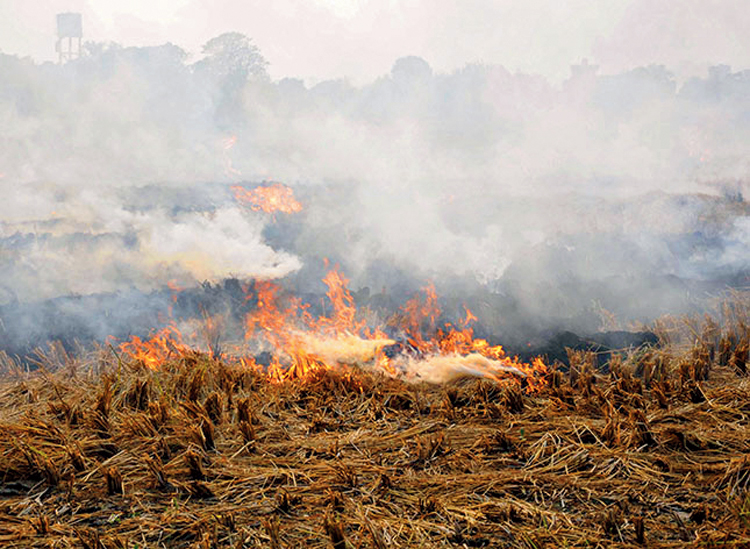 Paddy stubble is burnt at a farm on the outskrits of Amritsar on October 31