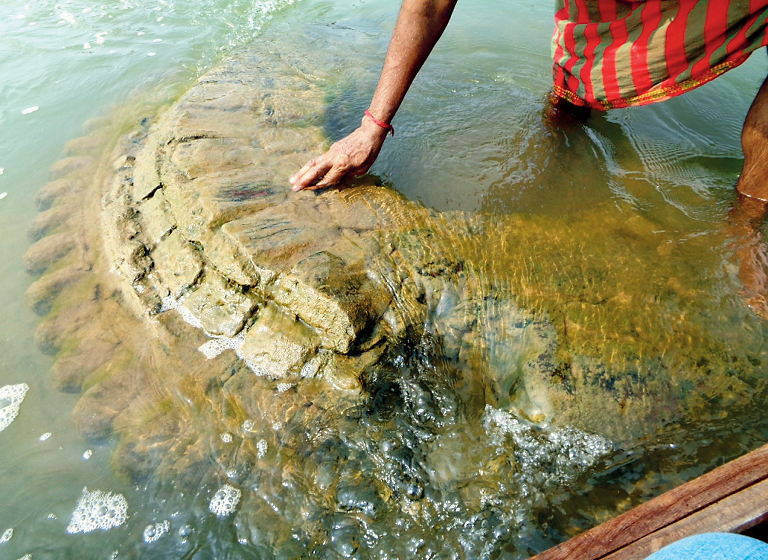 The crown of the 500-year-old submerged temple in Mahanadi