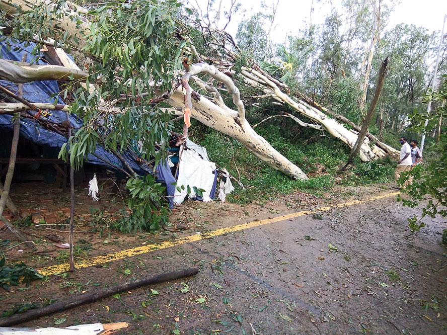 Trees felled by the cyclone in East Midnapore.