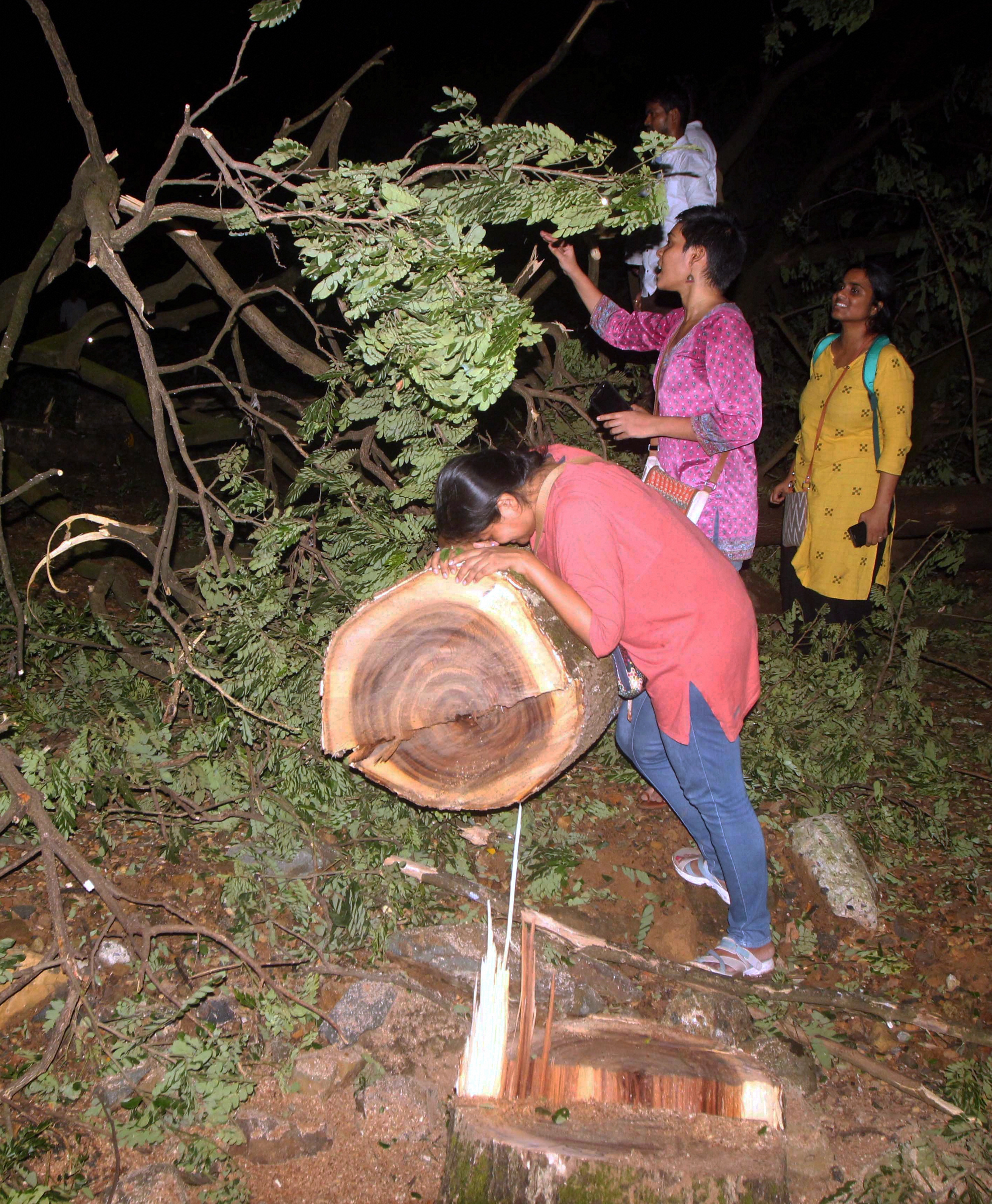 Don't cut trees now: Supreme Court on Aarey forest tree felling