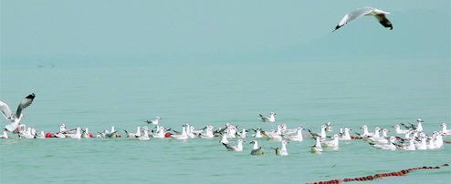 Villagers come forward to save birds