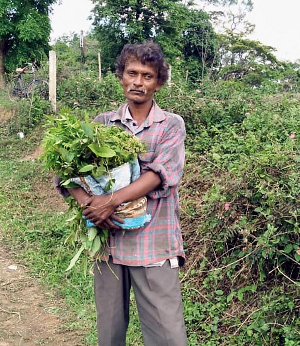 Babu Nayak collects herbs and shrubs in Cinnamara for sustenance.