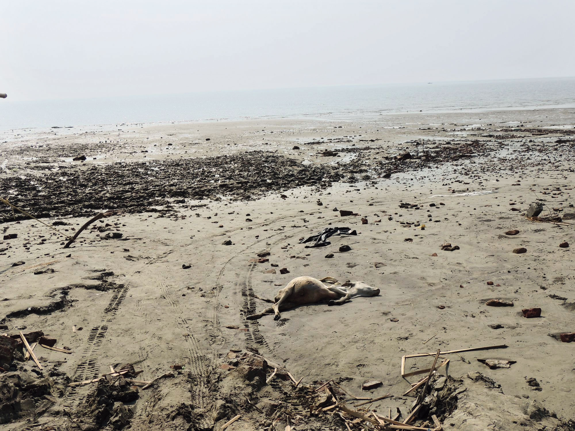 A carcass lying on Fraserganj beach that was destroyed by Cyclone Bulbul, with nothing left standing.