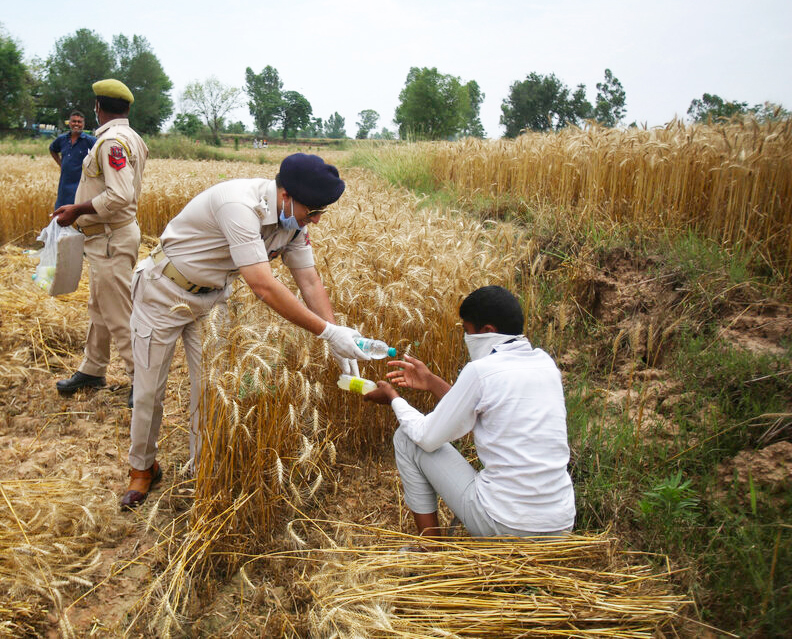 Police personnel distribute food and water to farmers harvesting wheat at a field on the outskirts of Jammu, Wednesday, May 6, 2020.