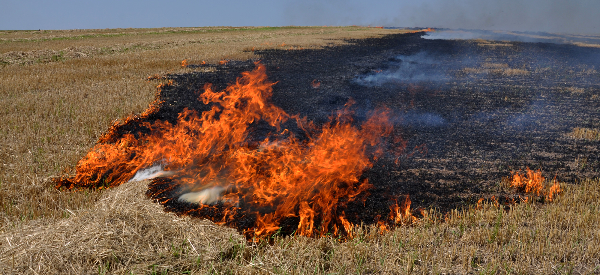 Burning of paddy stubble in fields, especially after kharif crop is harvested in October-November, is rampant across the state.